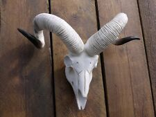 ANIMAL SKULL RAMS HEAD WALL MOUNTED RESIN SKULL HEAD