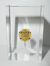Golden Tortoise Leaf Beetle - Insect Specimen in Clear Paperweight