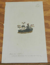 1804 Antique FLORAL COLOR Print/ANDROSACE VILLOSA/Hairy-Leaved Plant/Hand-Color