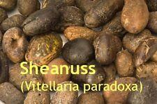 Shea Butter, Karité, raffin., reinweiß, 200ml, Topp-Qualität!! Original Ghana!!