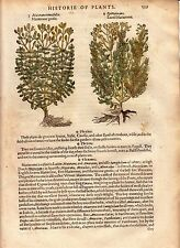 1597 Gerard Antique Herbal Historie of Plantes Handcolored Woodcuts Marierome