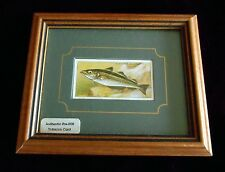 "JOHN PLAYER & SONS TOBACCO CARD PRE-1939 Framed ""SEA FISHES"" #21 POLLACK"