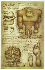 Bigfoot Information, Leonardo DaVinci Type Sketch, Sasquatch, Yeti --- Postcard