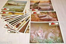 LE SIXIEME CONTINENT ! Doug McClure jeu 20 photos cinema  lobby cards 1974