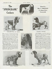 COCKER SPANIEL OUR DOGS 1943 DOG BREED KENNEL ADVERT PRINT PAGE SPRINGBANK
