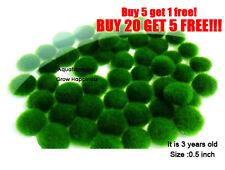 Live Nano Moss Ball-Plant for Sea Kit light Monkeys brine shrimp egg aquarium