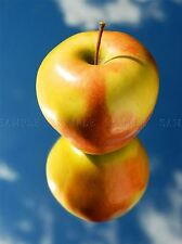 APPLE MIRROR BLUE SKY REFLECTION KITCHEN CAFE FOOD HOME PRINT POSTER BMP2408A