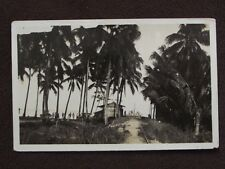 MEN UNDER PALM TREES  NEAR CARS AND SHACK Vtg REAL PHOTO POSTCARD