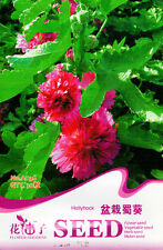 1 Pack 30 Hollyhock Seeds Althaea Rosea Pot Hollyhock Garden Flowers A036