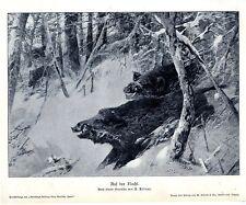 A. Kröner Auf der Flucht Wildschweine Keiler Historischer Kunstdruck 1906