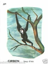 CARD BON POINT GIBBON SINGE MONKEY ASIA ASIE 60s