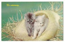 CAT IN THE HAT Gray & White Fluffy KITTENS Straw NO VACANCY Vintage Postcard