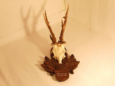 Grand Slam Roe Deer Antlers on a carved wooden trophy-plaque Wallmount 6
