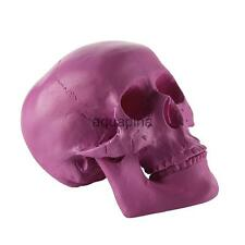 Replica Resin Realistic Human Skull Model Medical Party Horror Decor Purple