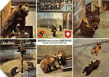 BF39403 bern switzerland  bear ours   animal animaux