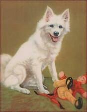 SAMOYED DOG with TOY by Diana Thorne vintage print 1934