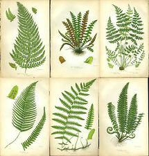 Lot of 6 PRATT Antique Fern Prints Botanical ferns  - c1860   - Ref P29