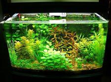 100 Semi tanti tipi di piante per acquario.