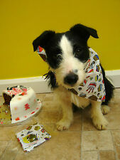 Dog Bandana, Birthday Banadana with little birthday cakes on, perfect for pooch