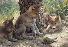 Carl Brenders THE SHELL GAME, wolf pups, turtle, art print, ARTIST PROOF A/P#9