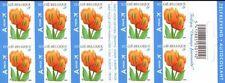 """Belgium**TULP """"Orange Favourite"""" TULIP-Booklet 10vals-2008-FLOWERS-BLOEM-Fleurs"""