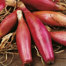 Onion - Long Red Florence - 250 Seeds