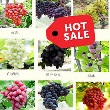 NEW 30pcs Mix Grape Fruit Seeds Red, Yellow, Black, White. Fruit Tree