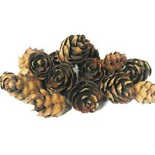 Mini Pine Cones Small Pack (50-55 cones) Ideal for Displays & Wreaths