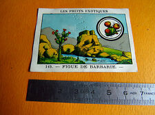 CHROMO 1939 CASINO LES FRUITS EXOTIQUES N°149 FIGUE DE BARBARIE CACTUS