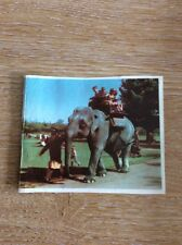 H8-1 Ephemera Picture Children Riding Elephant In Zoo