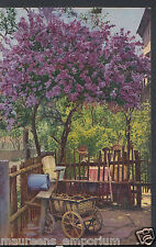 Beautiful Postcard - Gorgeous Tree, Wooden Cart and Buckets  BH5964