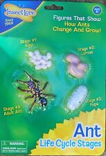 plastic Minibeasts /  insect ANT LIFECYCLE egg, larva, pupa, adult life cycle