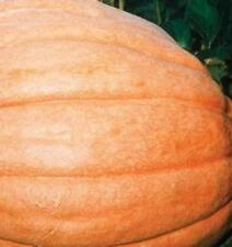 Pumpkin - Dills Atlantic Giant - 20 Seeds