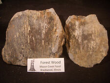 Mazon Creek Fossils Wood Fossil
