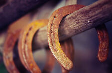 Framed Print - Rusty Old Horse Shoes Hanging in a Barn (Picture Poster Art)