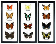 3 Framed Wall Art Display Butterfly Sets Insect Taxidermy Decor Gift FS gpasy #2