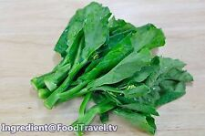 2,100 Seeds Of HK Chinese Kale Kailaan Chinese Broccoli Gai Lan Free Ship++.