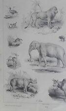 Animaux lion éléphant rhinoceros Victor ADAM PASSE/TEMS GRAVURE originale XIXéme