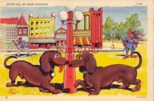 1940 AFTER YOU, MY DEAR ALPHONSE. two dachshunds flirt