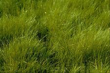 594010 Hair Grass A4 Photo Texture Print