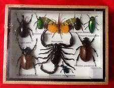 REAL EXOTIC 9 INSECT DISPLAY TAXIDERMY ENTOMOLOGY SCORPION CICADA BEETLE INSECT