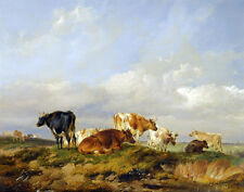 Cooper Sidney Thomas Cows In Kent Meadow Print 11 x 14    #5832