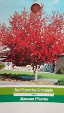 Red Flowering Crabapple 5 gallon Tree Plant Fruiting Flower Trees Landscaping