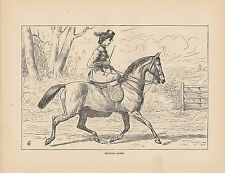 EQUESTRIAN LADY RIDING HORSE SIDESADDLE VICTORIAN SIDE SADDLE ANTIQUE PRINT 1873