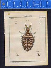 FORMICALEO: Antlion larvae XVIII -Roesel/Rosel Insecten 1749 Engraved Print