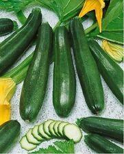 Black Beauty Zucchini Squash Summer 20 Seeds Heirloom Treated Prolific Spineless