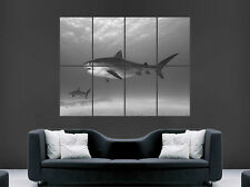GREAT WHITE SHARK POSTER SEA WATER ART WALL PICTURE   GIANT HUGE