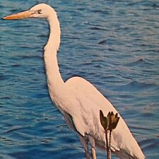 Great White Heron Postcard Florida Everglades National Park Unused Truslow Vtg
