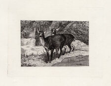 "Fantastic Auguste Andre LANCON ORIGINAL 1800s Etching ""Winter Deer"" SIGNED COA"