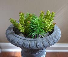 Artificial Yacon Grass Mini Pine tree Unkillable Succulents Plants Landscape